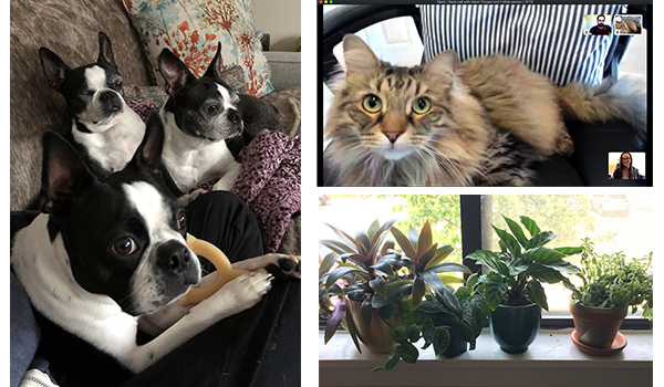 pets-and-plants