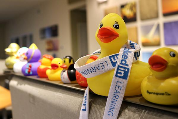 Duck Invasion