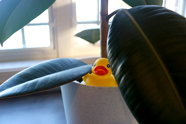 Duck hiding in potted plant