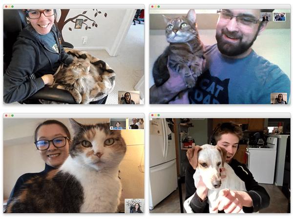 Pet Conference Calls